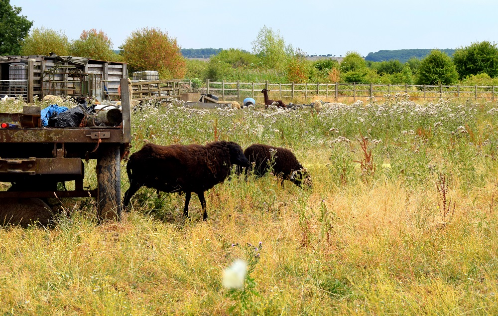 Llama Spotting At Attenborough Nature Reserve