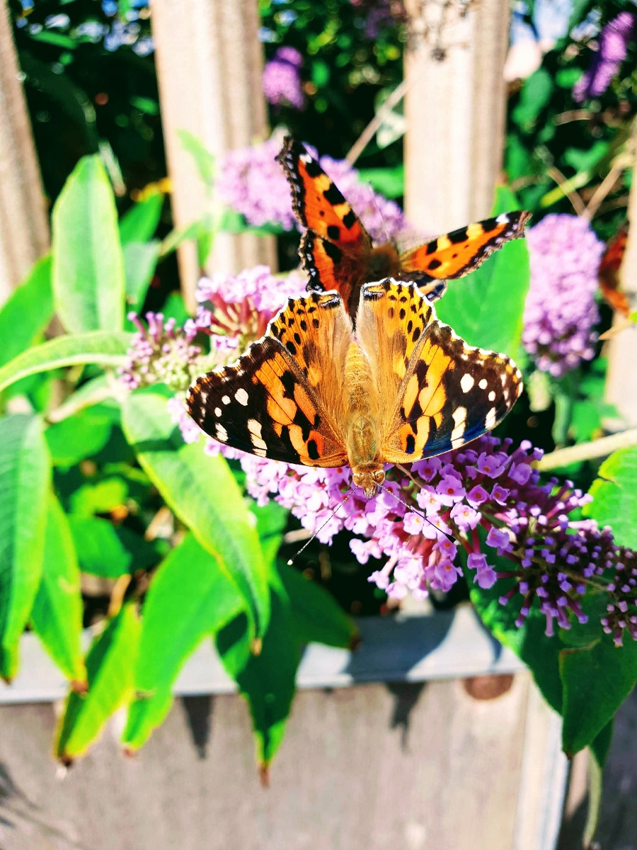 Beautiful Butterflies: Summer Is Not Over Yet #WeekendLinkUp