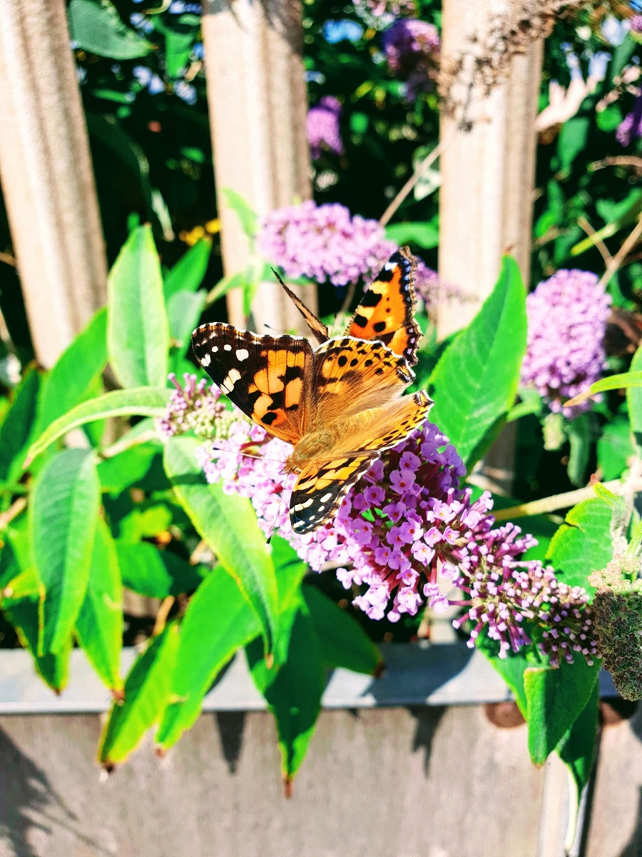 Beautiful Butterflies: Summer Is Not Over Yet