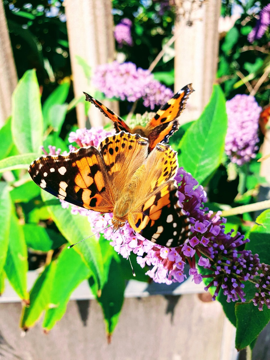 Beautiful Butterflies: Summer Is Not Over Yet