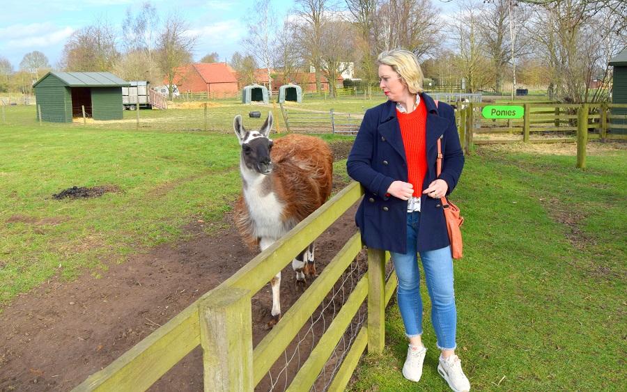 Llama at White Post Farm in Nottingham