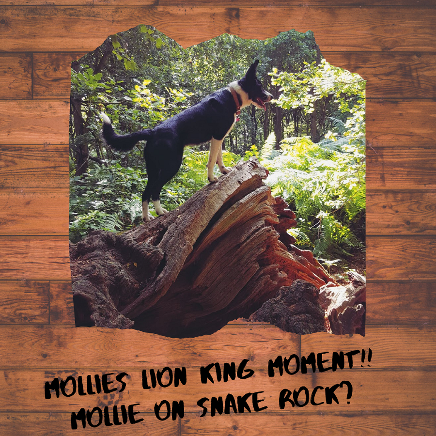 Mollies Lion King Moment!! Mollie On Snake Rock?