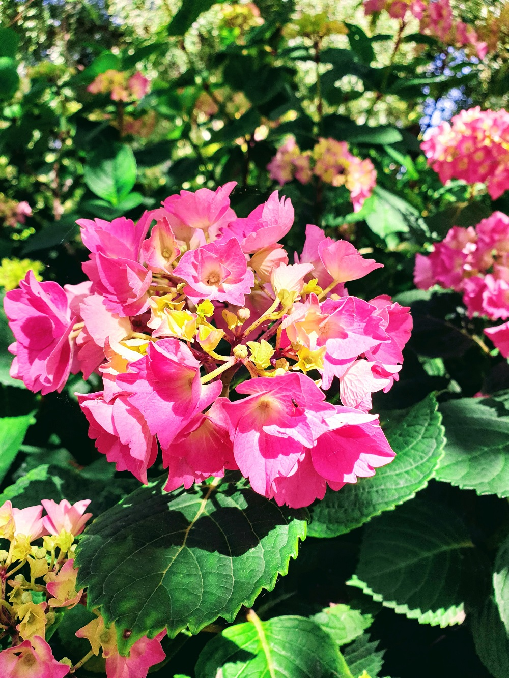 Summer Flowers At Victoria Embankment: #WWLinkUp