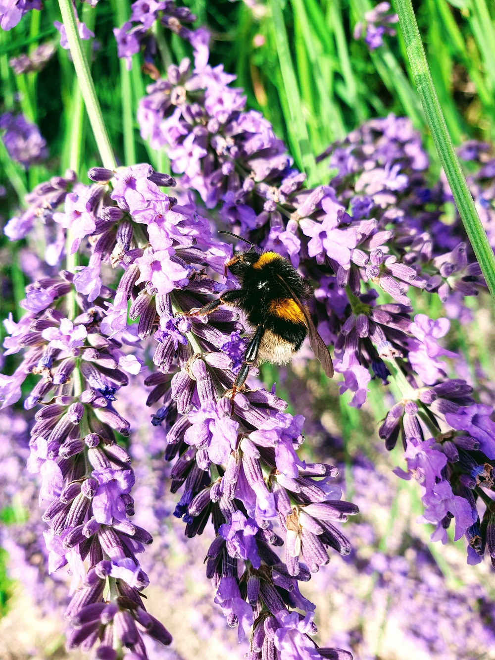 Bee Inspired: The Wednesday Photo Link Up