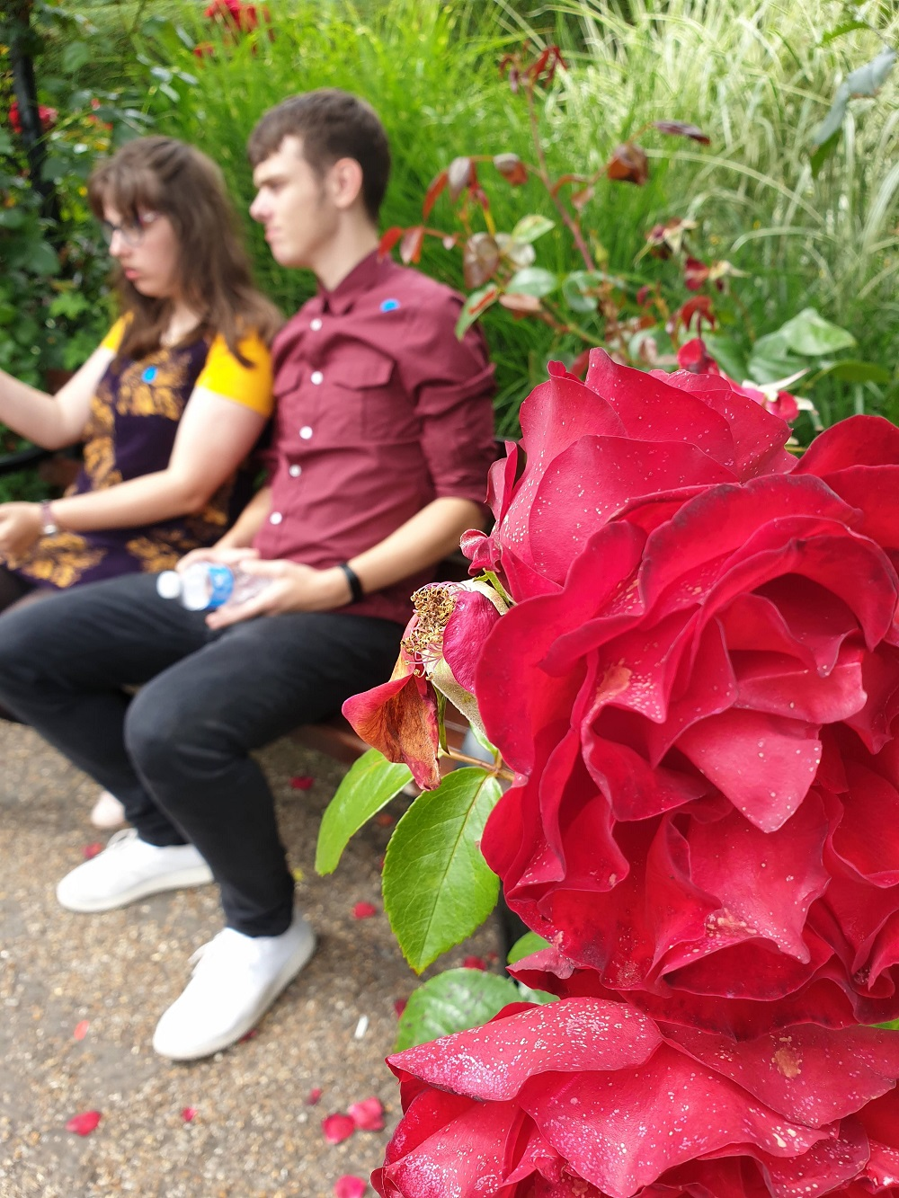 I never Promised You A Rose Garden: Wednesday Link Up.