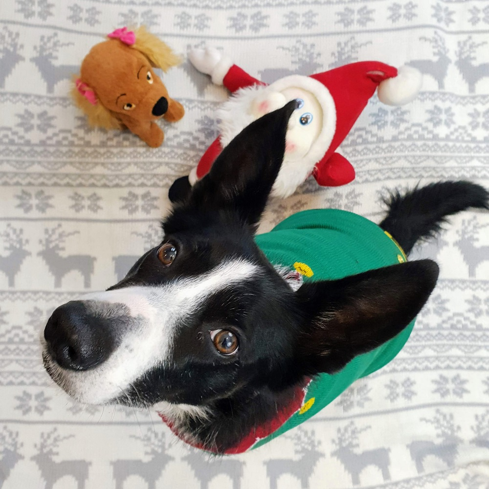 Christmas Jumpers For Dogs The Wednesday Link Up