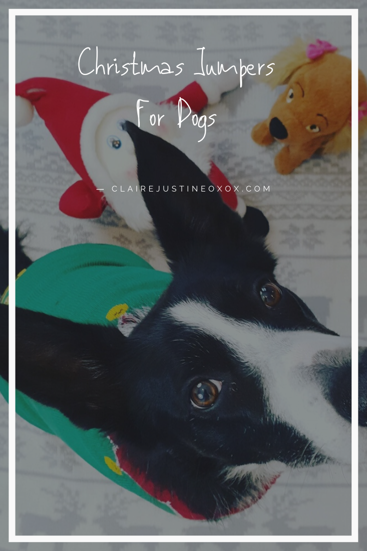 Christmas Jumpers For Dogs : Look At Mollie The Elf!!
