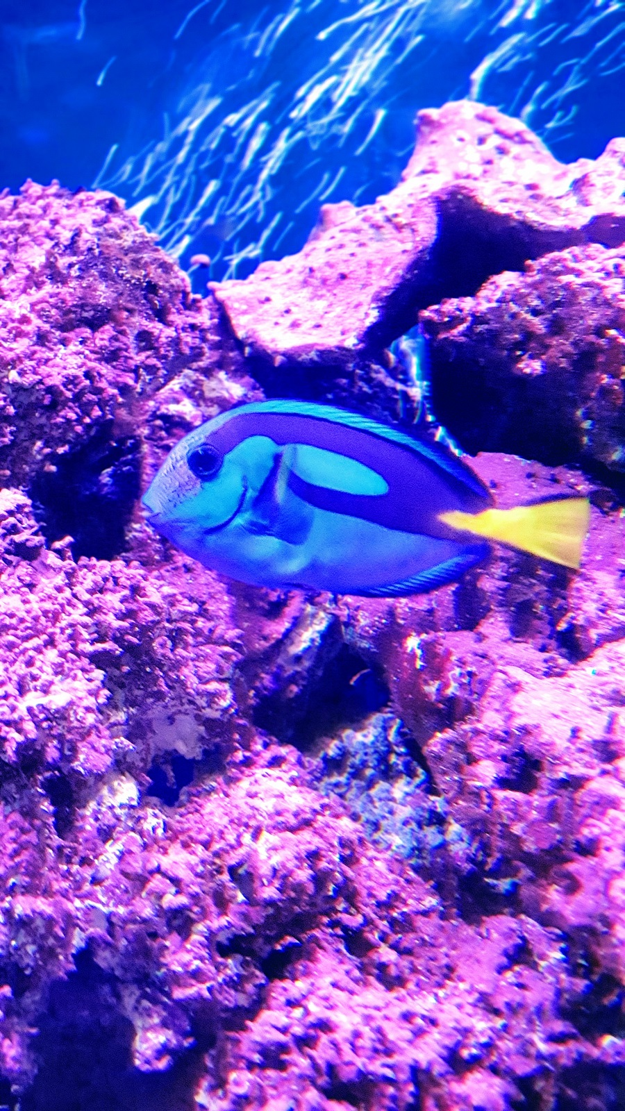 Just Keep Swimming~ Finding Dory At The Farm
