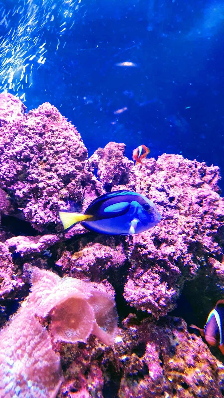 Just Keep Swimming~ Finding Dory