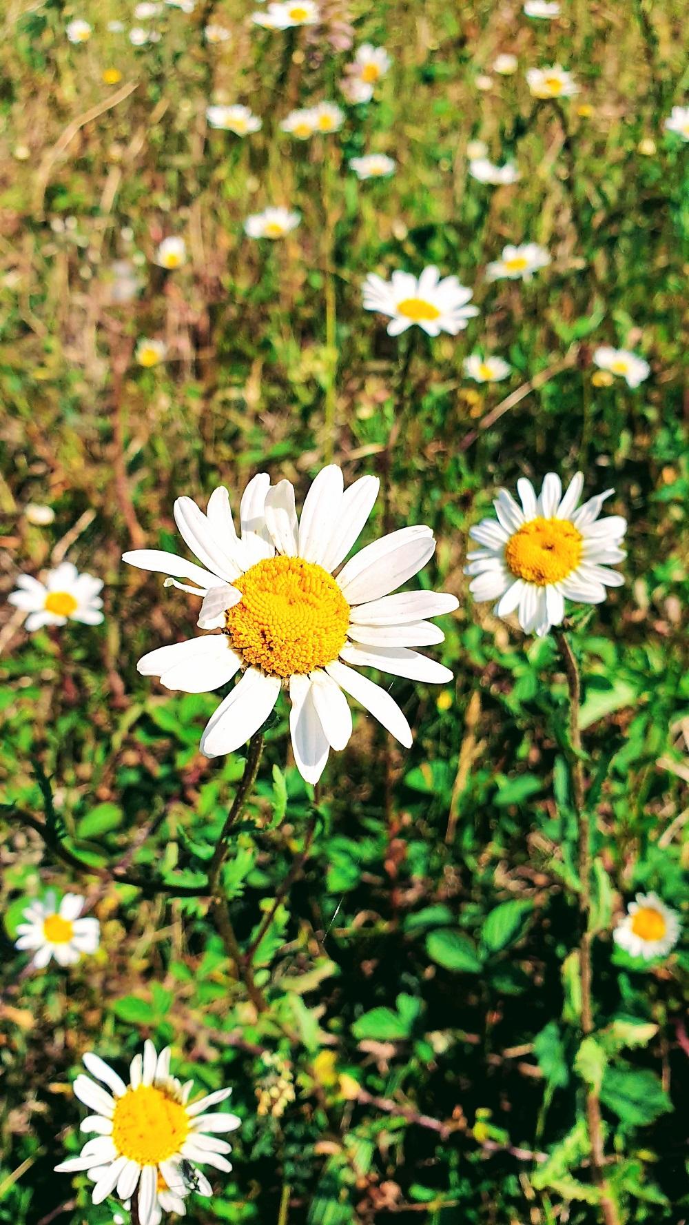Let Us Dance In The Sun, Wearing Wild Flowers