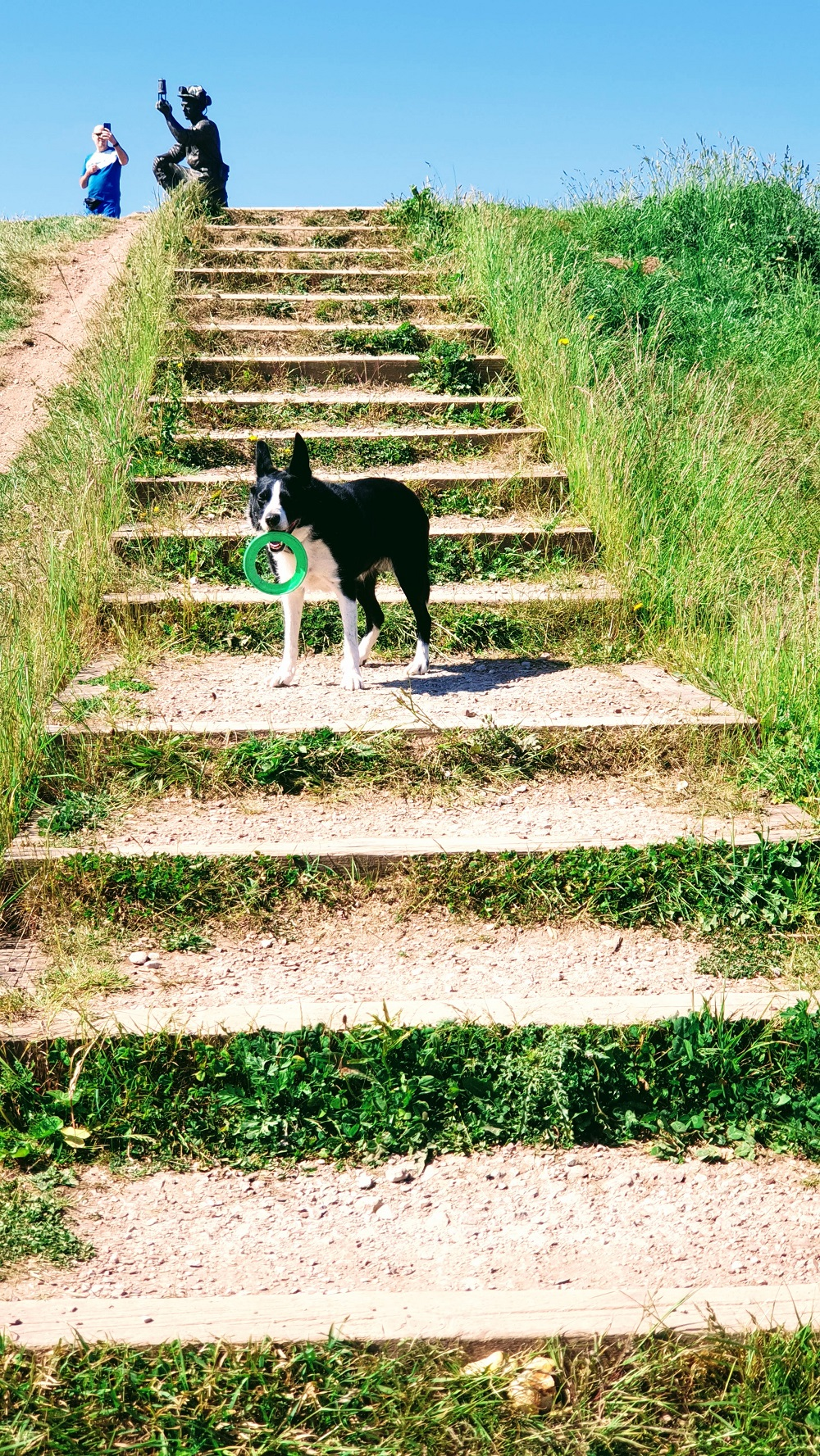 The Worries Of Dogs: Mollie The Collie Diaries