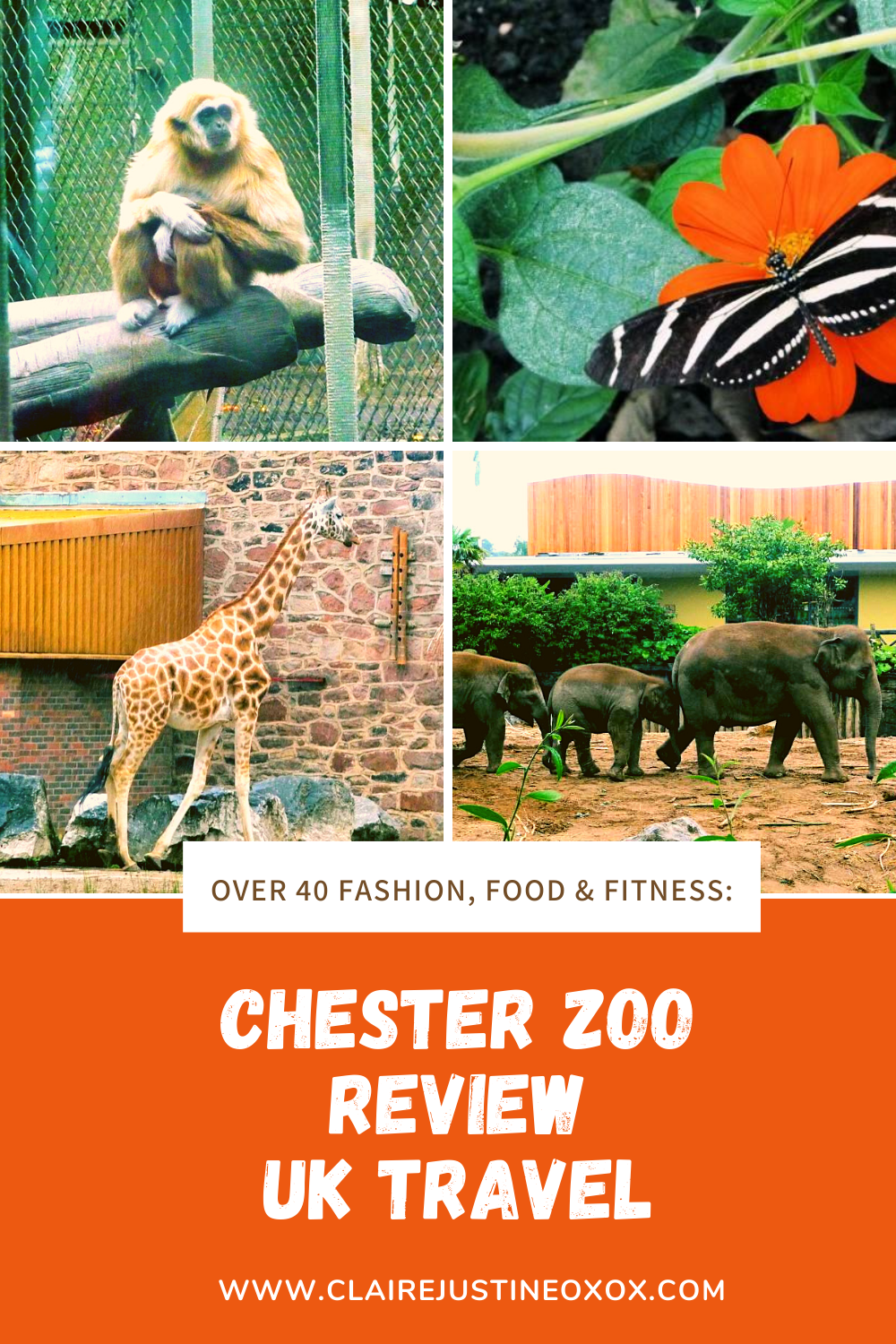 Chester Zoo Review UK Travel Days Out.