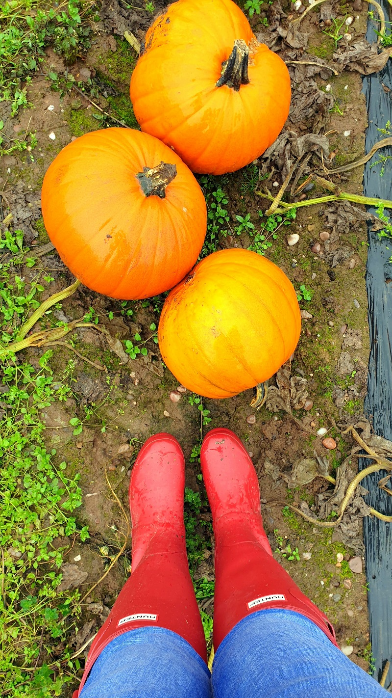 Visit To The Pumpkin Farm And Some Recipe To Try
