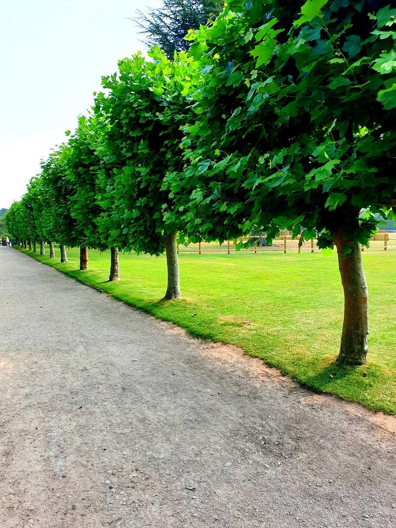 A Walk At Rufford Abbey County Park Summer 2020