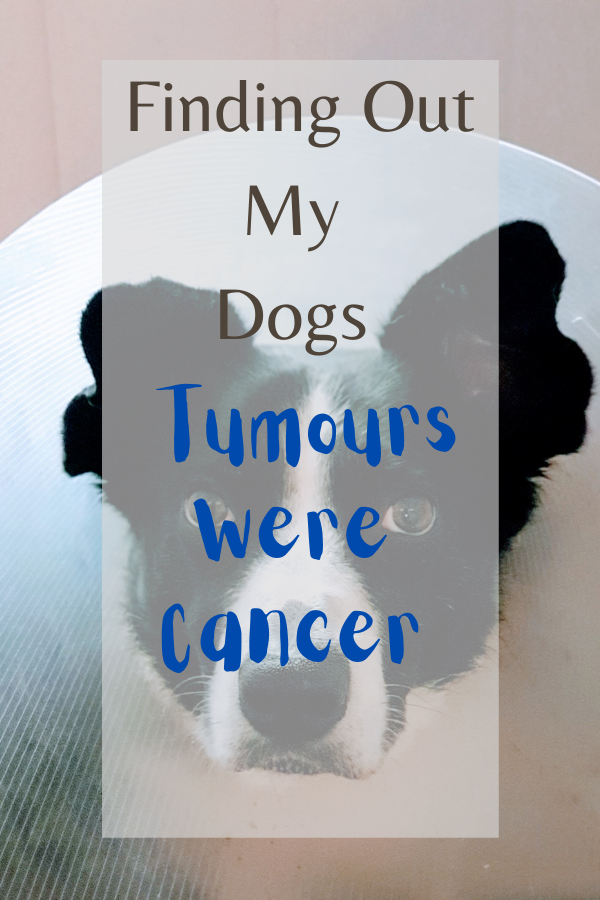 Finding Out My Dogs Tumours Were Cancer