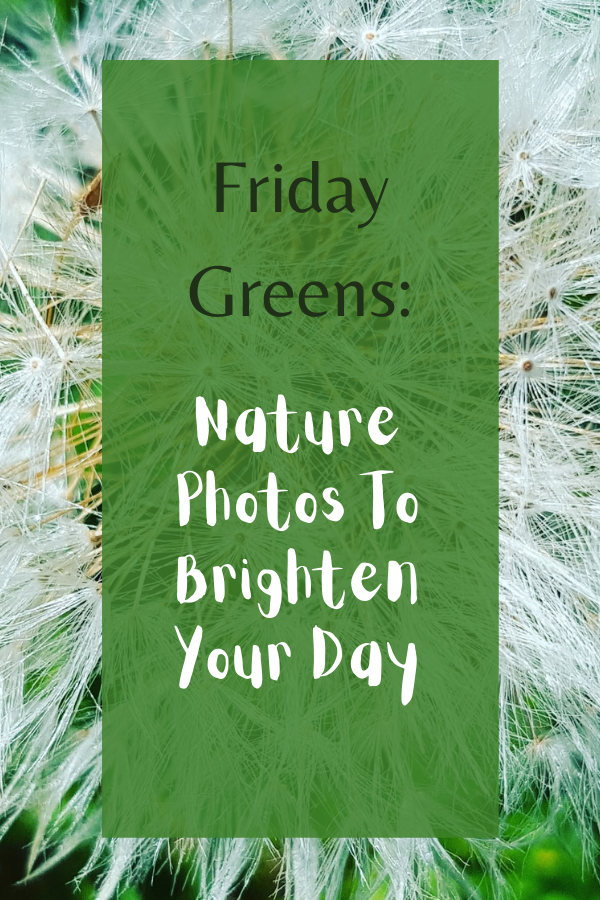 Friday Greens: Nature Photos To Brighten Your Day
