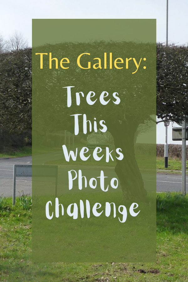 The Gallery: Trees This Weeks Photo Challenge