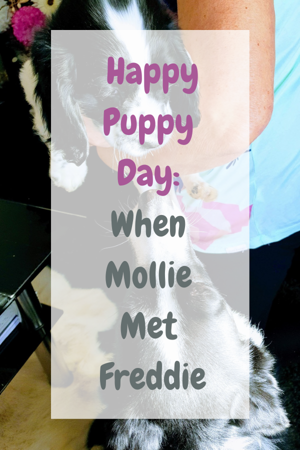 Happy Puppy Day When Mollie Met Freddie
