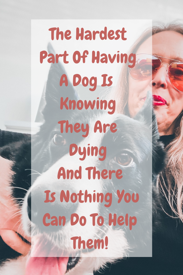 The Hardest Part Of Having A Dog Is Knowing They Are Dying And There Is Nothing You Can Do To Help Them!